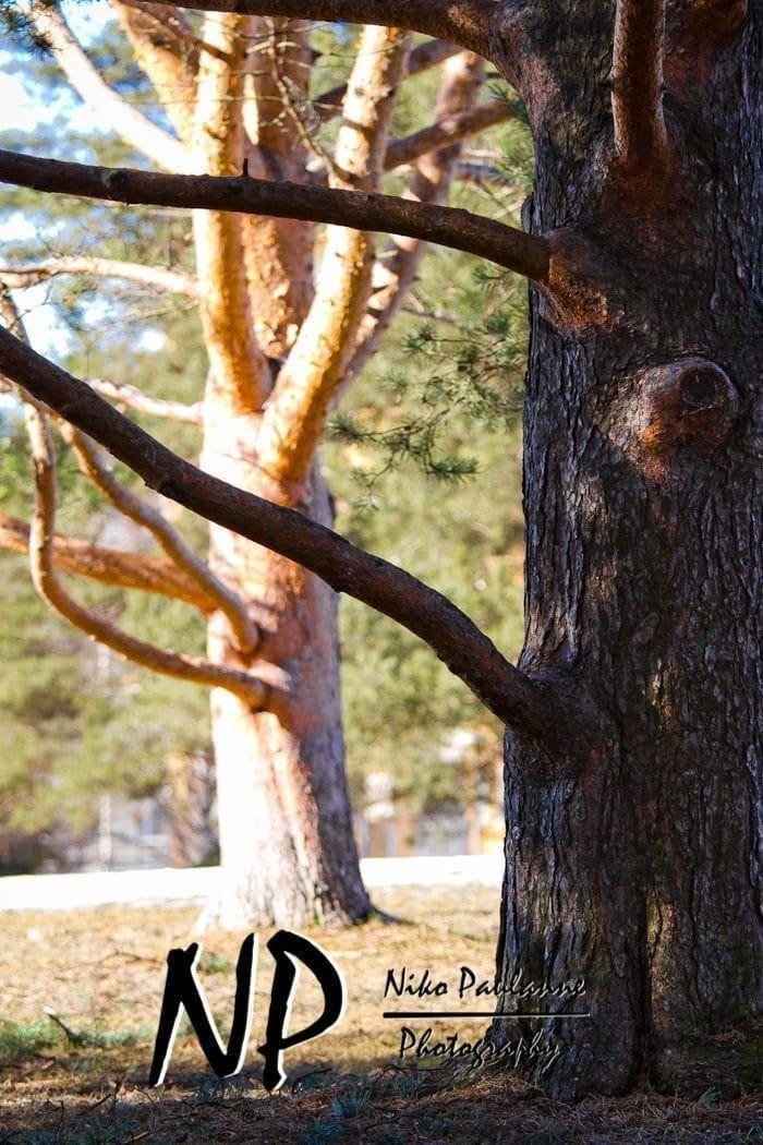 2011-04-15-photowalking-valokuvauskavely-satoa