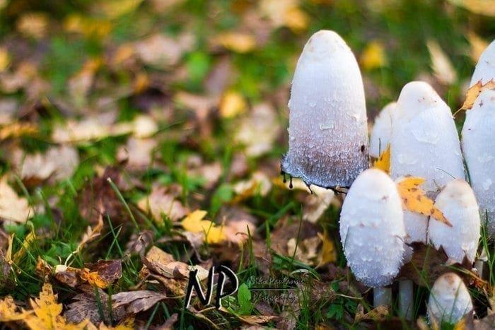 Photowalking - Valokuvauskävely Tampere 2012-10-11 (c) Niko Paulanne Photography - www.nikopaulanne.com (13)